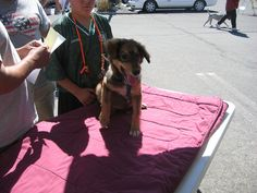 Puppy at free vaccine clinic by Founder of Feeding Pets of the Homeless, via Flickr