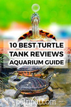 10 Best Turtle Tank Reviews – Turtle Aquarium Guide  #aquarium #turtle #tank #pets #animals Animals For Kids, Animals And Pets, Baby Animals, Funny Animals, Animal Quotes, Animal Memes, Pet Turtle Care, Types Of Turtles, Turtle Aquarium