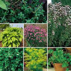 Herbs with magical properties