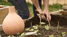 Quelles alternatives au tuyau et à l'arrosoir ? Voici 5 objets qui vont révolutionner l'arrosage de vos plantations !