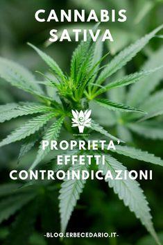 La Cannabis: ecco un approfondimento per conoscere meglio questa pianta, caratteristiche, principi attivi e i suoi effetti sull'uomo.… Pharmacology, Good To Know, Health And Wellness, Herbs, Nature, Herbalism, Plants, Ganja, Naturaleza