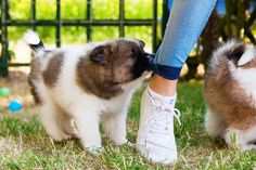 """Is your pup going through that stage where she bites everything in sight — including your pant legs and other """"off-limits"""" items? Our expert's got advice."""