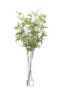 Bamboo (GN241): Bamboo, Green, Tall Glass Cylinder