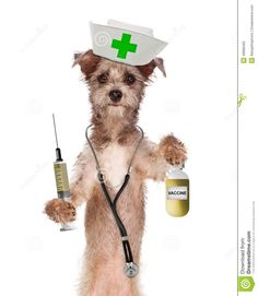 Dogs as nurses   Cute dog dressed as a nurse with a stethoscope, vaccination bottle and ...