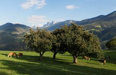Südtirol, Italy