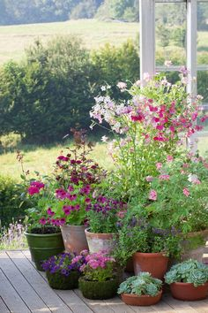 How to plant in pots and containers part summer - Garden Care, Garden Design and Gardening Supplies Summer House Garden, Garden Cottage, Garden Pots, Potted Garden, Herbs Garden, Gardening Vegetables, Outdoor Potted Plants, Small Cottage Garden Ideas, Hill Garden
