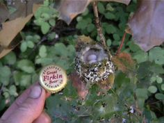 Hummingbird a little larger than a bottle of paradise Nature Animals, Baby Animals, Cute Animals, Birds And The Bees, All Birds, Pretty Birds, Beautiful Birds, Hummingbird Nests, All Gods Creatures