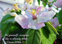 A macro photograph of a flower with a quote by Oscar Wilde