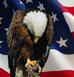memorial day eagle pictures