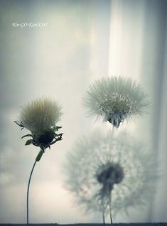 たんぽぽの綿毛ドライの作り方 の回 | Lotus Flower リンゴカンチ Diy And Crafts, Crafts For Kids, Diy Flowers, Dandelion, Purple, Green, Plants, Handmade, Image