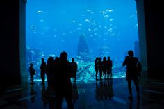Dubai via Flickr #aquarium #mydubai #dubai #uae #travel #discover #world