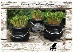 Halloween Cauldrons Potjies - We planted the Cauldrons with Herbs to be eaten at Dinner. Of course you can fill them with Candy.any typical halloween goodies and use them as Decorations Gifts and Favors Halloween Traditions, Halloween Activities, Halloween Crafts, Origin Of Halloween, Scary Decorations, Diy Party Decorations, Halloween Decorations, Scary Ghost Stories