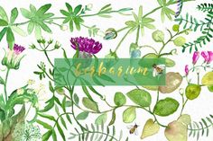 Herbarium. Green herbs watercolor. By LABFcreations