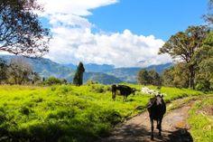 Les Andes, Baños:  prairies des alentours