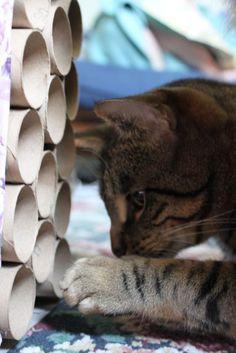 DIY interactive treat cat toy..