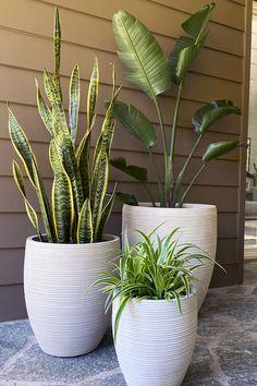 Potted Plants Patio, Pool Plants, Backyard Plants, House Plants Decor, Pots & Planters, Plants For Porch, Planters Around Pool, Pots For Plants, Backyard Landscaping