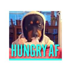 New #GIF in #Mix Pack. Send to #squad #chat. Download #app in profile. #dogsofinstagram #food #hungry #instafood #imessage #line #kik #viber #tech #startup #meme #lol #comedy #funny #emoji #digitalsticker #mojilab