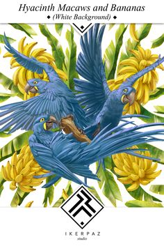 Hyacinth Macaws and bananas on white background. Illustration by Iker Paz.