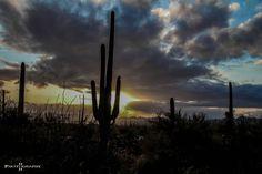 """""""Desert sunset"""" .... Saguaro Ntln.Park, AZ"""