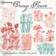 Check out Vintage Flower Clipart by Tangle's Treasures on Creative Market