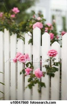 Picket fence decorated in PINK roses!
