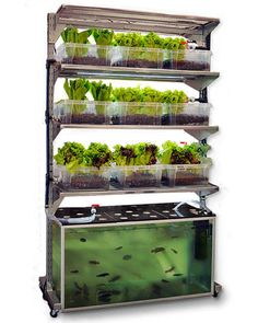 "Dubbed ""Malthus,"" this Ikea-hacked project by Conceptual Devices pieces together a 100g fish tank, plastic grow beds, a pump and piping onto an IKEA Broder shelf, with wheels. Malthus is designed to be an in-home unit, and to grow one meal a day, a portion of fish with a side of salad. If you don't know yet, aquaponics is basically hydroponics + fish in a sustainable loop. The fish provides nutrients and CO2 to the plants, and the plants in turn purifies the water and returns O2 to the fi..."