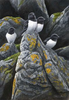 Dr. Jeremy Paul, Wildlife Artist
