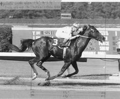 Image Detail for - Native Diver and jockey Jerry Lambert winning the 1965 Hollywood Gold ...