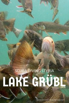 Have you heard of Lake Grübl in Austria? It's a paradise for divers that seek a fun weekend trip! Backpacking Canada, Canada Travel, Diving Quotes, Canada Holiday, Tulum Beach, Travel Through Europe, Diving Course, Sea Photography, Adventure Travel
