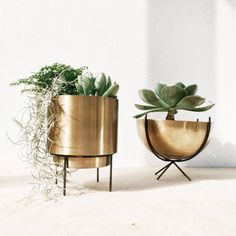 Add some green accent to your living space. Featuring a minimal cylindrical shape attached to mini metal stand. This chic metal planter surely adds some modern accent and charm to your indoor space. Perfect to host your succulent and cacti collection. Shape : circular round comes with mini stand holder. Materials : brass Color : gold / black Dimension : Diameter 15cm , Total height 18.5cm, Stand height 7.5cm Plants are not included Metal, Wipe Clean Hand crafted