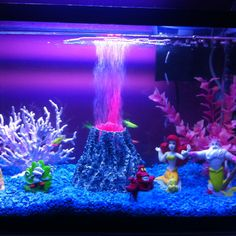 1000 images about fishies on pinterest aquarium for Neon fish tank