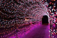 flower petal tunnel mehndi enterance  wedding decor ideas india indian inpiration