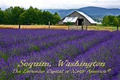 Sequim, WA ... The lavender capital of North America. Join us for our 19th Sequim Lavender Weekend July 17 - 19, 2015. Click for details. #sequimwa #lavender