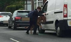 Un estudiante que vio un perro atrapado por su Correa atascada en la puerta de un automóvil, actu...