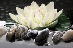 Photo about The artificial lotus flower in the garden pond of hotels, its shape is very lifelike. Image of china, green, flowery - 4544376 Spring Flowers Wallpaper, Flower Wallpaper, Love Flowers, Beautiful Flowers, Water Flowers, Beautiful Mess, Zen Meditation, Serenity, Garden Sculpture