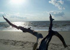 driftwood on Clam Creek beach, Jekyll Island, 22 April 2012