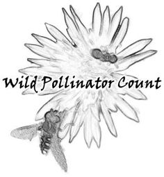 Wild Pollinator Count - dedicate 10 minutes to helping document Australia's wild pollinators by choosing a flowering plant, watching it for 10 minutes, and recording what you see. Photography Workshops, Macro Photography, Stingless Bees, Carpenter Bee, Citizen Science, Teacher Books, Nature Study, Science Projects, Counting