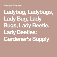 Ladybug, Ladybugs, Lady Bug, Lady Bugs, Lady Beetle, Lady Beetles: Gardener's Supply