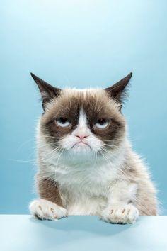 Die «Grumpy Cat» hat ihrer Besitzerin Tabatha Bundesen bis heute mit Merchandise und Werbung geschätzte 100 Millionen Dollar eingebracht