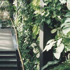 Green Walls   Vertical Gardening   Bringing Gardens Into Inner City  Landscapes Https:/