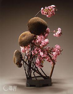 いけばな草月流 「勅使河原茜 桜をいける」<第3回> ワシントンの桜 ...
