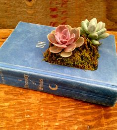 Cleverly designed book planter carved out from a hardcover book and waterproofed. Love this!