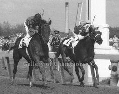 Tim Tam- 1958 Winner of Kentucky Derby and Preakness Calumet Farm, Horse Racing, Race Horses, Preakness Stakes, Triple Crown Winners, Derby Winners, Tim Tam, American Pharoah, Run For The Roses