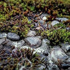 Steine/stones