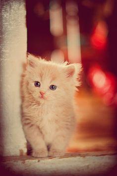 Kitten on the street...By r_risus, via Flickr