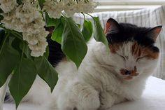 Queen of Strandhagen B&B. B & B, Bed And Breakfast, Finland, Queen, Cats, Animals, Gatos, Animales, Animaux