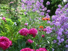 Beautiful English Country Gardens   english country garden   Beautiful Blooms