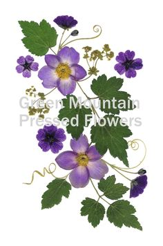 Anenome Pressed Flower art - can be greeting card or print.
