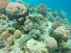 Sweethearts on Adventure Deep Blue Sea, Island Resort, Underwater World, Scuba Diving, Romance, Adriatic Sea, Adventure, Diving, Romance Film