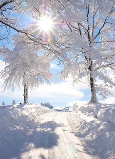 Photo: Sun shining on a beautiful winter wonderland! Winter Love, Winter Snow, Winter Christmas, Winter White, Snow White, Christmas Presents, Christmas Time, White Pic, Fall Winter